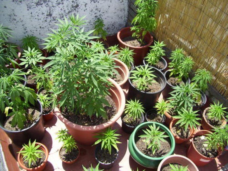 Detienen a una pareja que transportaba 46 kilos de marihuana — Santo Tomé