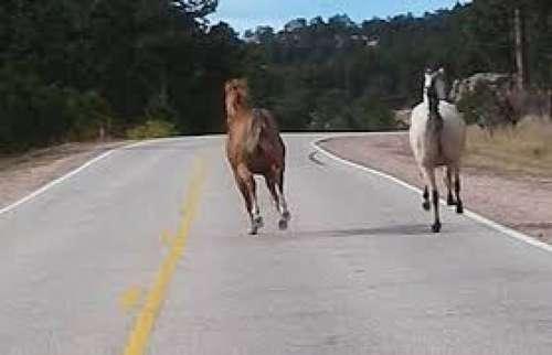Motociclista chocó contra un caballo en Metán
