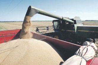 Estiman que la cosecha de soja será récord