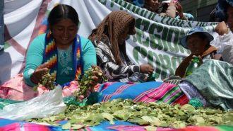 Bolivia preparará veinte mil bolsas de coca para recibir al Papa